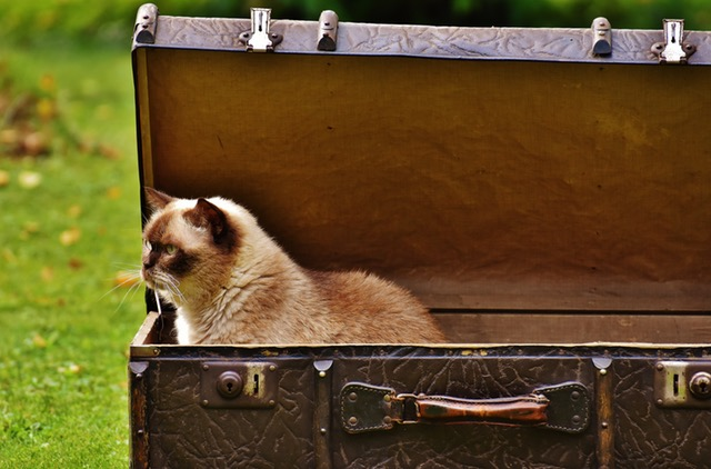 Allow your cat time to get used to its carrier