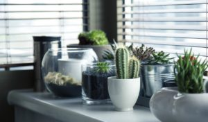 Decorate your home by putting some home plants