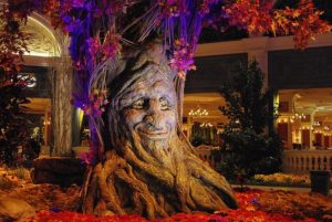 A fascinating tree with a carved face on one side.